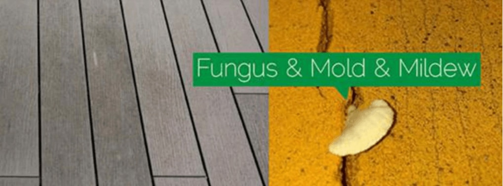 anti-fungus, mold, and mildew